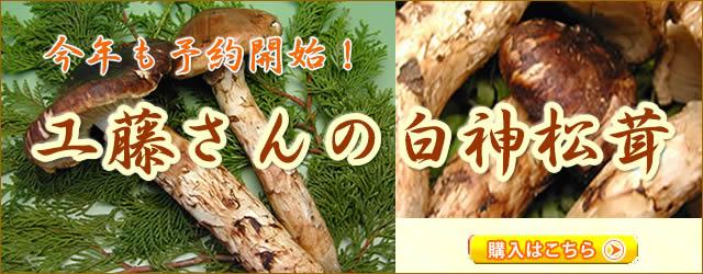 白神工藤さんの松茸