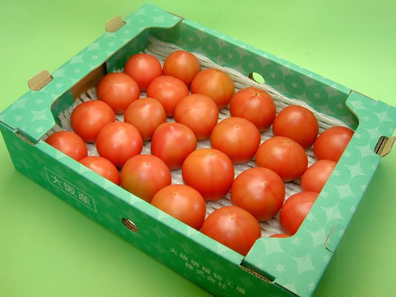 大阪府立大学フルーツトマト