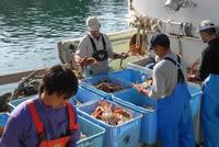 2009年11月6日 間人(たいざ)がに解禁 かに漁船にて