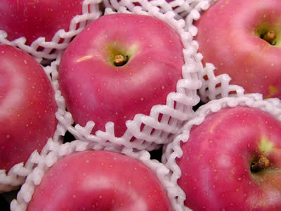片山りんご園のりんご
