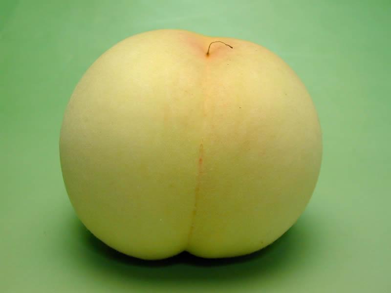 中谷勉さんの桃清水白桃
