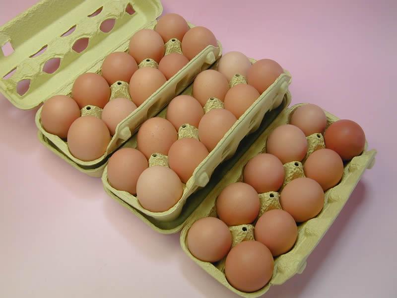 ポロニ養鶏場の元気な卵