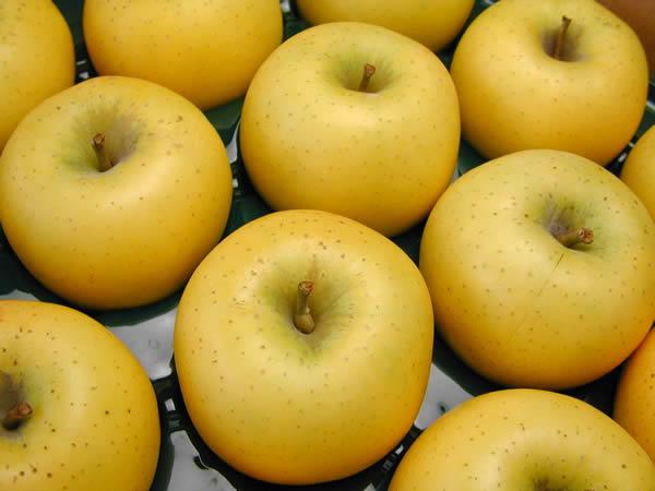 りんご シナノゴールド