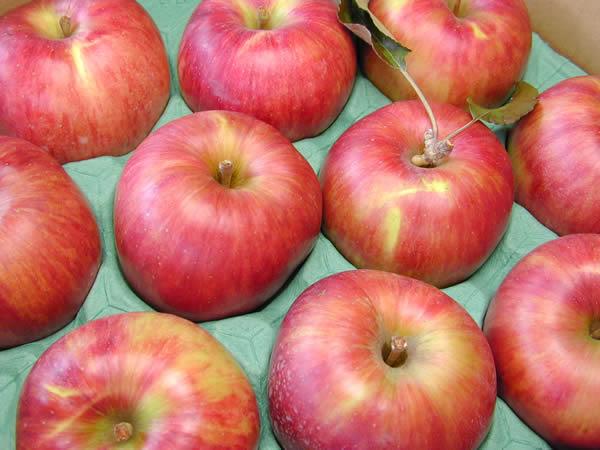 りんご つがる
