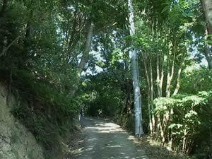 栗山園への道