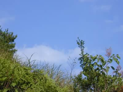 9月15日の栗山園の様子です。
