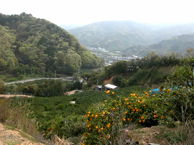 栗山園の園地