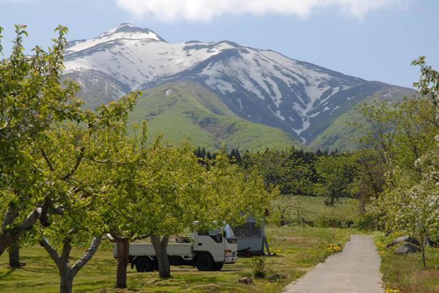 片山りんご園から見る岩木山
